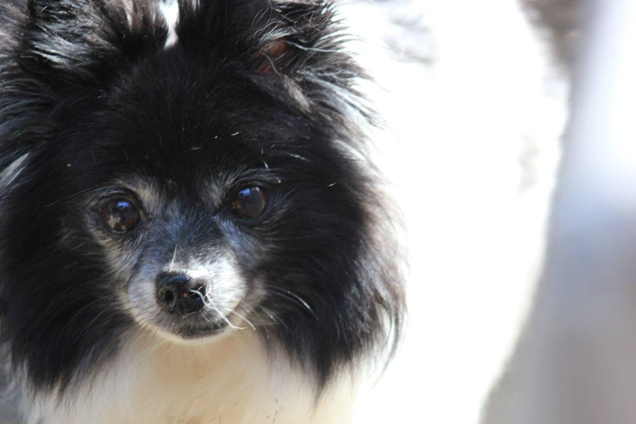 Road Dogs and Rescue Sponsor Dog Breezie Snowbee