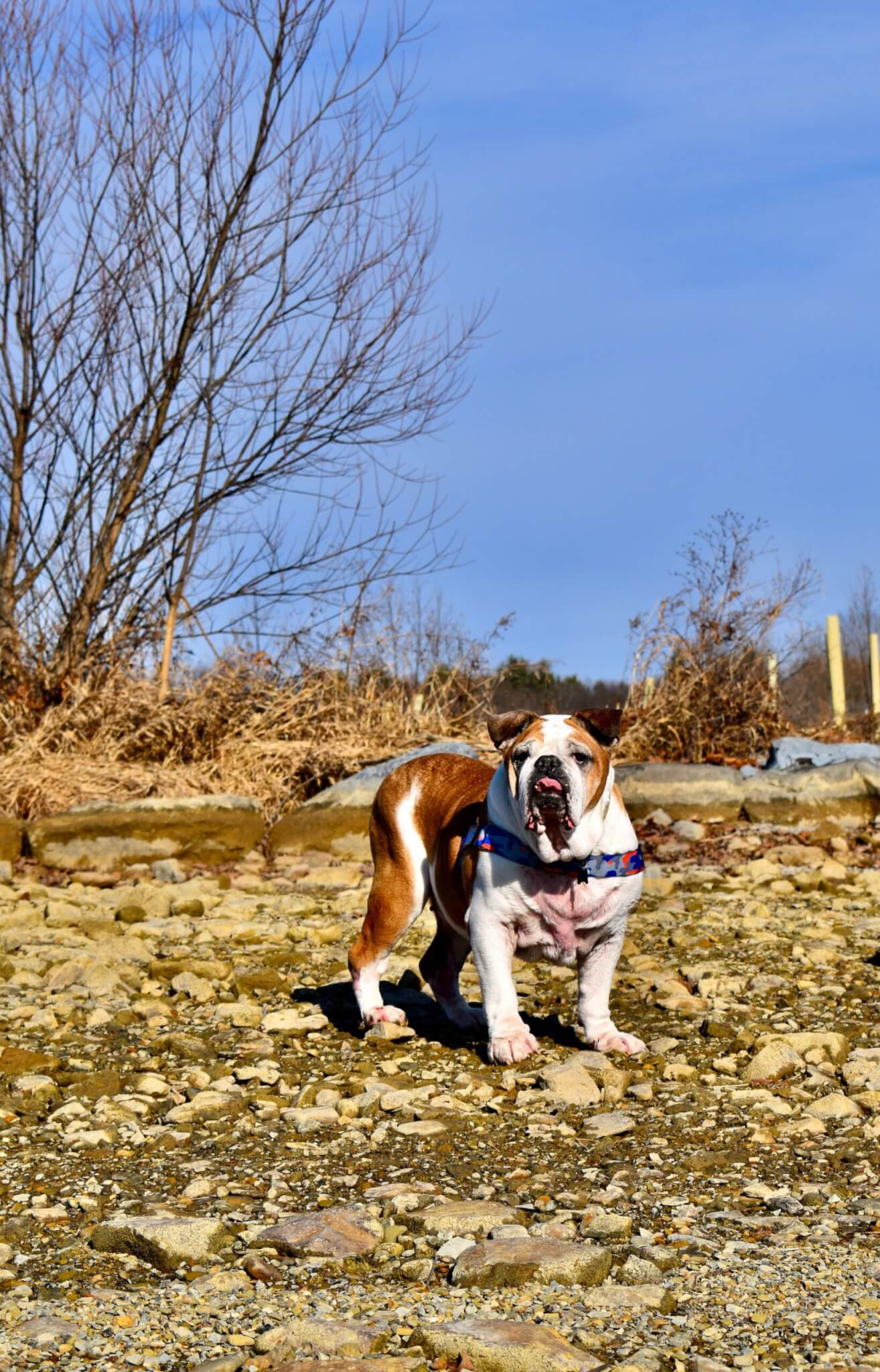 Road Dogs and Rescue Sponsor Dog Spike the Duke Adventure